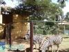 003-zoo-2011