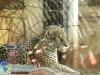 008-zoo-2011