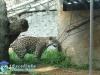 021-zoo-2011