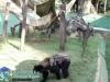 022-zoo-2011