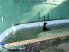 023-zoo-2011